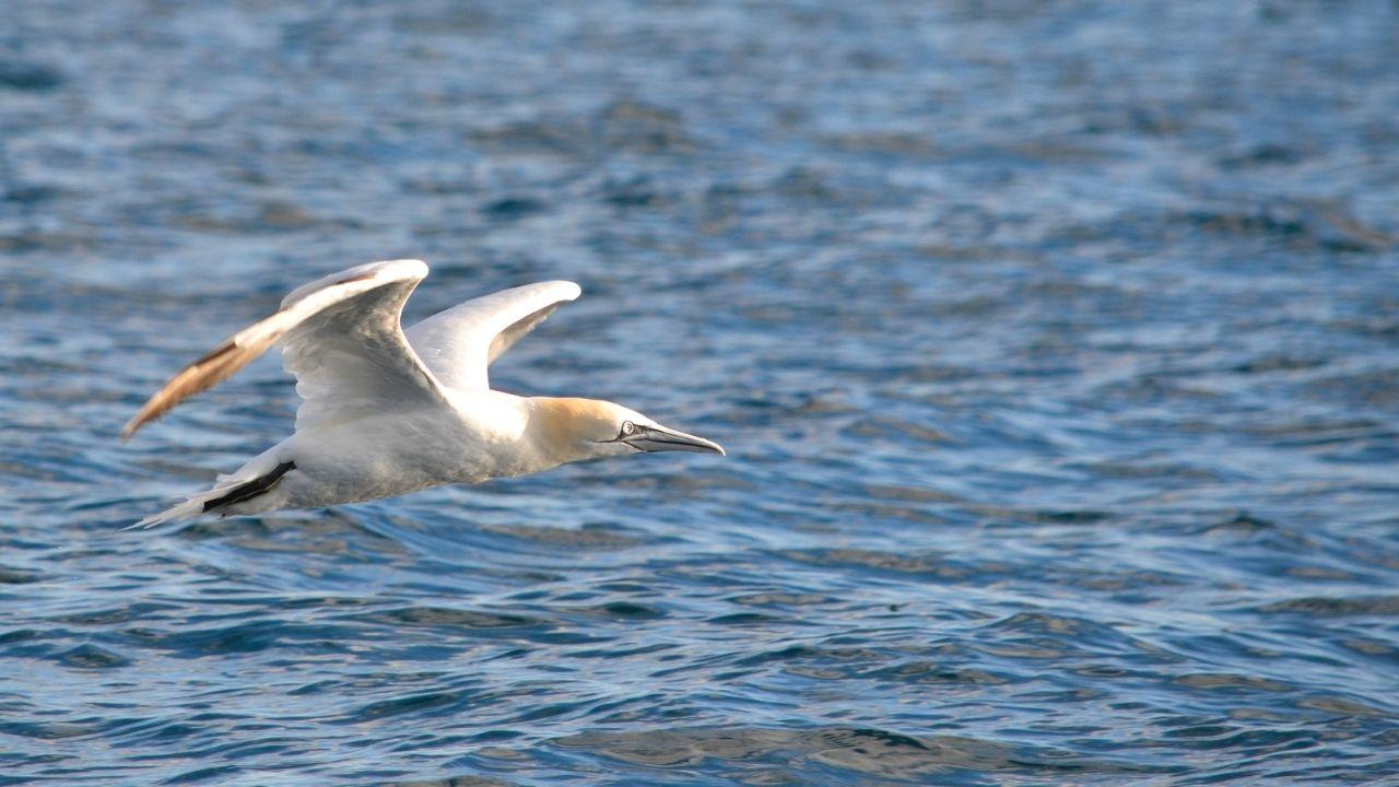 DDP-Monitoraggio-uccelli